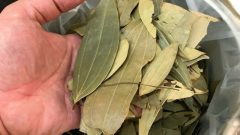 What are the benefits of bay leaf to hair and skin? How to apply bay leaf to the skin and hair?