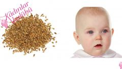 Is Anise Tea Given To Babies For Gas Pain And Comfortable Sleep?