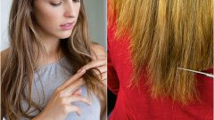 Vegetable Oils Contributing to Hair Growth