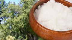 What are the benefits of camphor tree? Camphor diseases are good for?