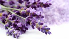 What are the benefits of lavender? What does lavender tea do? Where is lavender oil used?