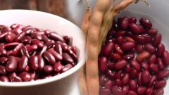 What are the benefits of Mexican beans? How to consume mexican beans?