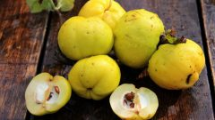 What are the benefits of quince? How to make quince leaf tea and what does it do?