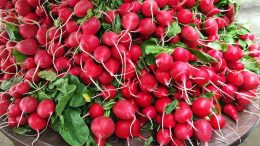 What are the benefits of radish? What happens if you regularly consume black radish juice?