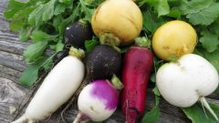 What are the benefits of radish? What happens if you regularly consume black radish juice? What is black radish for?