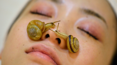 What does snail cream do? The benefits of snail cream on the skin